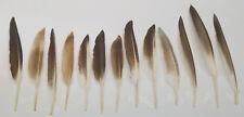 Seltene Flügelfedern Wildente,15-20 cm,für Hutschmuck!Vogelfedern,Federgestecke!