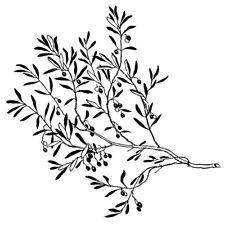 Sticker Décor Nature Branche d'Olivier XXL, 40x40 cm à 50x50 cm (ARB013)