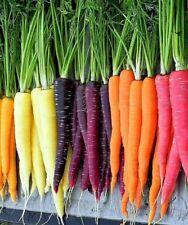 Rainbow Carrot Blend Mix, Seeds, Colorful, NON-GMO, Beta Carotene, Vitamin A