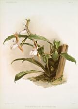Zygopetalum Rostratum By Joseph Sander Floral Print