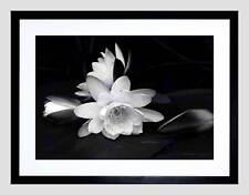 Blanco Flor Floración Fondo Negro Imagen de Impresión Arte Enmarcado B12X9435