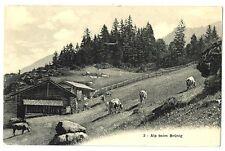 CPA Suisse Mitelland Brünig Alpages châlets animaux