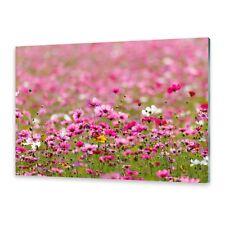 Glasbilder Wandbild Druck auf Glas Kosmos Blumen