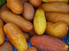 Organic Poona Kheera Cucumber Seed - Indian Heirloom Seeds (0.5gr to 20gr)