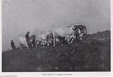 1940  --  LABOURS EN CHAMPAGNE BERRICHONNE     L070