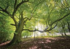 VLIES Fototapete-WALDLICHTUNG-(11799)-Baum Wald Grün Natur Landschaft Mural XXL