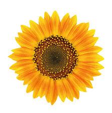 Sonnenblume Auto Aufkleber Deko Kühlschrank Fliesen Wand Tür Fenster WC Toilette