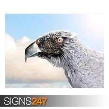 STRANGE Eagle (3566) Animale POSTER-Foto Poster Arte Stampa A0 A1 A2 A3 A4