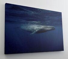 Wal Unterwasserwelt Meer Leinwand Bild Wandbild Kunstdruck L1316
