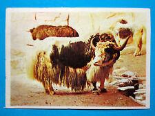 Figurina Panini-ANIMALI DI TUTTO IL MONDO 1965-n.140-YACK-rec
