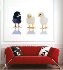 poster poster decorazione da muro Pulcini ref 3624885 (6 dimensioni)
