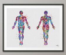 Muscular System Watercolor Print Human Body Anatomy Art Medical Art Doctor-1101