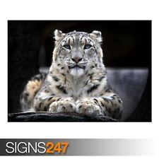 SNOW LEOPARD (3356) Animale POSTER-Foto Poster Arte Stampa A0 A1 A2 A3 A4