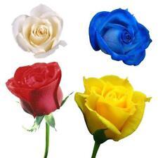 100 Pcs LADY Most FAVOURITE Garden Flowers Seeds Pot Bonsai ROSE b5