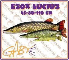 cuscino imbottito luccio 43-80-110cm pesce idea regalo pesca pescatore Gaby