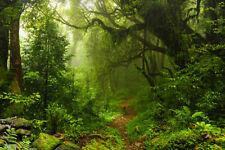 Fototapete Nepal Dschungel Urwald -  Kleistertapete oder Selbstklebende Tapete