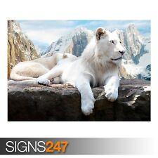 SNOW LION (3364) Animal Poster -  Photo Picture Poster Print Art A0 A1 A2 A3 A4