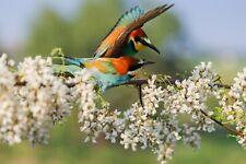 VLIES Fototapete-VÖGEL-(3955V)-Baum Blüten Tiere Natur Vogel Orchideen Tapete