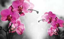 VLIES Fototapete-ROSA ROSEN- -Design Deco Blumen Blüten Pflanzen Orchidee 2168