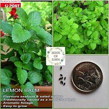 LEMON BALM SEEDS( Melissa officinalis); Medicinal herb; Attracts bees
