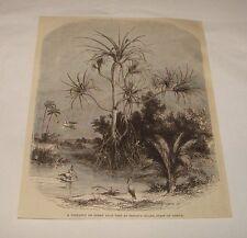1876 magazine engraving ~ PANDANUS OR SCREW PALM, Prince Island