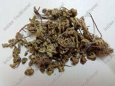 Bulk Selaginella Bryopteris Sanjeevini Sanjivini Booti Mrit-Sanjeevani Herb