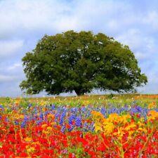 Wildflower Texas Oklahoma Mix Seeds (7g+Seeds)