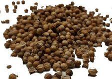 Coriander Seeds (Dhana) Whole - CHILLIESontheWEB