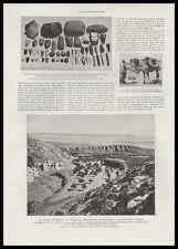 ARCHEOLOGIE MONGOLIE  DES MONGOLS VIEUX DE 20 000 ANS - EXPEDITION ANDREW  1926