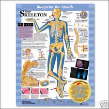 Kids Skeletal System Laminated Chart 20x26