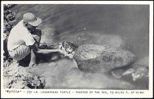 "Miami, Florida, ""Myrtle"" Loggerhead TURTLE Tortoise, Theatre of the Sea 50s RPPC"