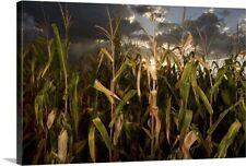 """""""Corn field, Nebraska"""" Canvas Art Print"""