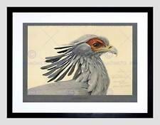 Peinture abyssinie oiseaux mammifères fuertes secrétaire oiseau encadré art imprimé B12X12864
