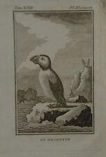 1748-UCCELLO-PULCINELLA-DI-MARE-ACQUAFORTE-ORIGINALE