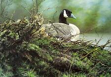 """Alan Hunt  """"Canada Goose """"   S/N L/E Print"""