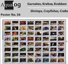 AQUALOG Poster Freshwater Shrimps, Crayfish and Crabs, LAMINATED