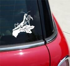 Praying Mantis Detailed Tenodera Sinensis Graphic Decal Sticker Art Car Wall
