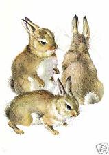 Mildred Eldridge- Three Young Rabbits- MEDICI POSTCARDS