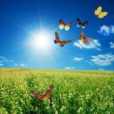 Stickers muraux déco : champ de fleurs papillons 1220