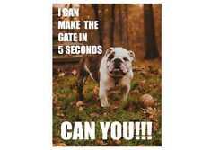 Bulldog cane può rendere il cancello in metallo stile Retrò Vintage, Segno Di Placca Muro