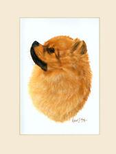 Original Pomeranian Painting by Robert J. May