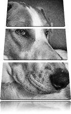 Jack Russel Terrier Descansa Situado 3-Teiler Foto en Lienzo Decoración de Pared