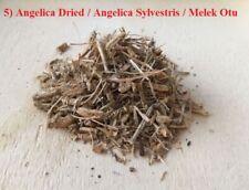 5) Angelica Dried & Powder / Angelica Sylvestris / Melek Otu & Tozu