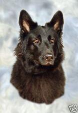 German Shepherd Dog/Alsatian Blank Card 9 by Starprint