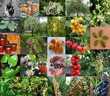 Aust & International Native Bush Tucker, lots of types Fruit Tree edible - seeds
