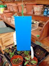 10 X Grande Azul Sticky Trampas-wetstick insecto Pegamento para thrip minador de la hoja Pulgones
