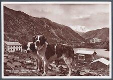 VALLE D'AOSTA GRAN SAN BERNARDO 24 ALBERGO ― CANE CANI - DOG Cartolina FOTOGRAF.